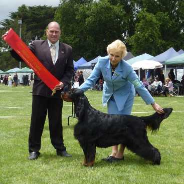 Gordon Setter Triseter Kennels Ice Runner Up In Show Dec 2010.
