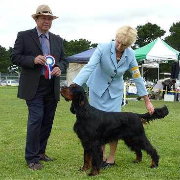 Gordon Setter Triseter Kennels Jai Puppy In Group 2011