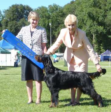 Gordon Setter Triseter Kennels Jai Puppy In Show Dec 2010